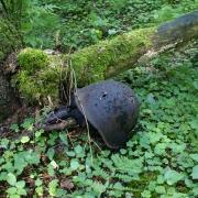 Kara liecības Zvārdes mežos